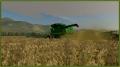 Soybean Harvest Underway